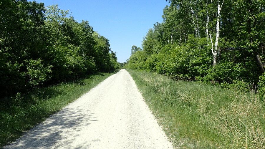 <p>Las w okolicach ZA Puławy</p>