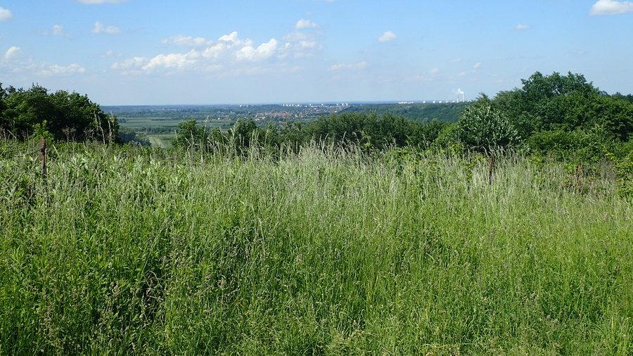 <p>Widok z Góry Trzech Krzyży w Parchatce w kierunku Puław</p>