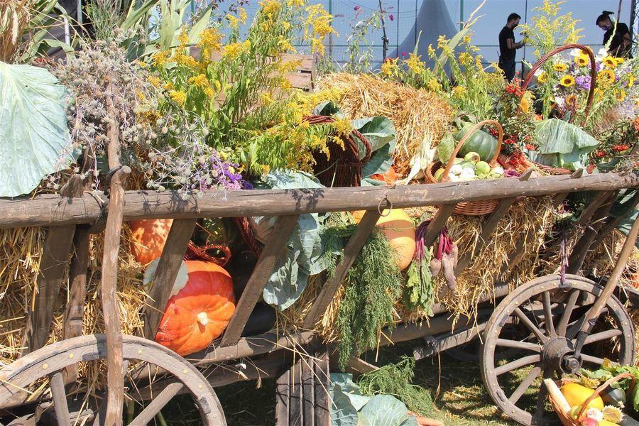 Dekoracja z płodów rolnych