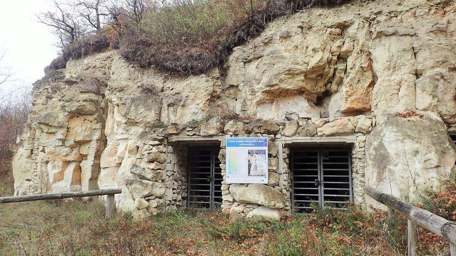 Ścianka Pożaryskich w Bochotnicy
