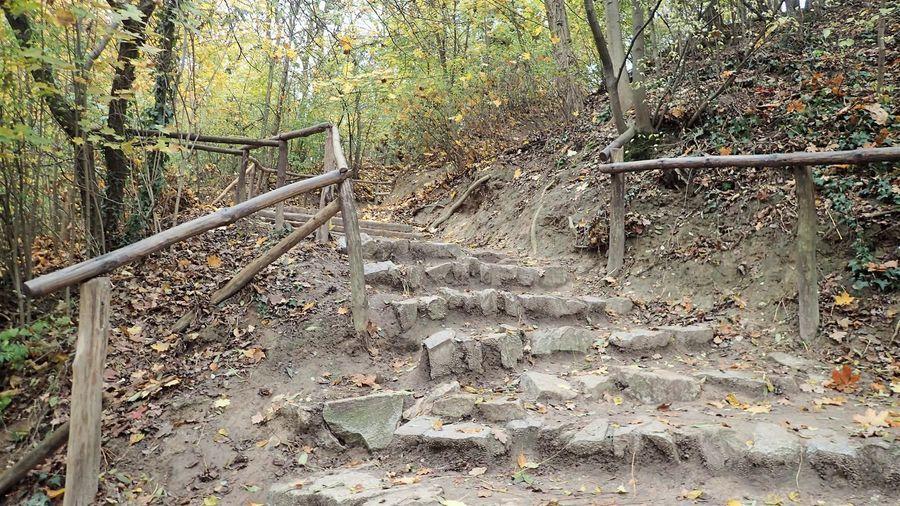 Końcówka ścieżki na Górę Trzech Krzyży w Kazimierzu Dolnym