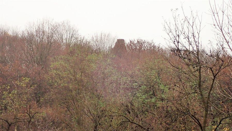 Wzgórze z ruinami Zamku Esterki
