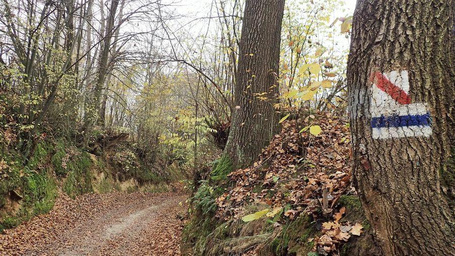 Wjeżdżamy w las