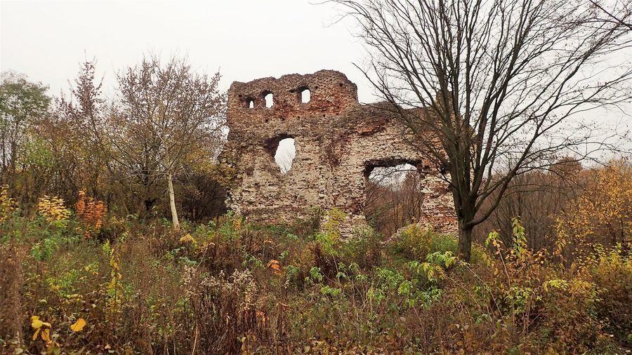 Ruiny Zamku Esterki
