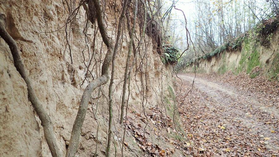 Korzenie drzew w ścianie wąwozu