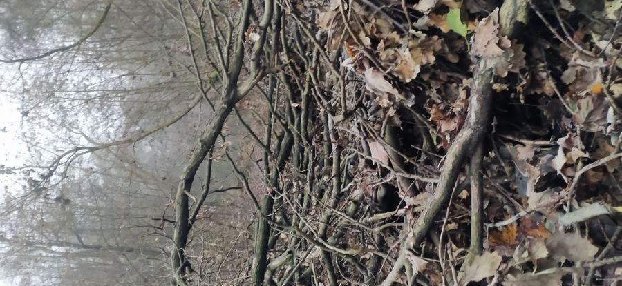 Zwalone drzewo