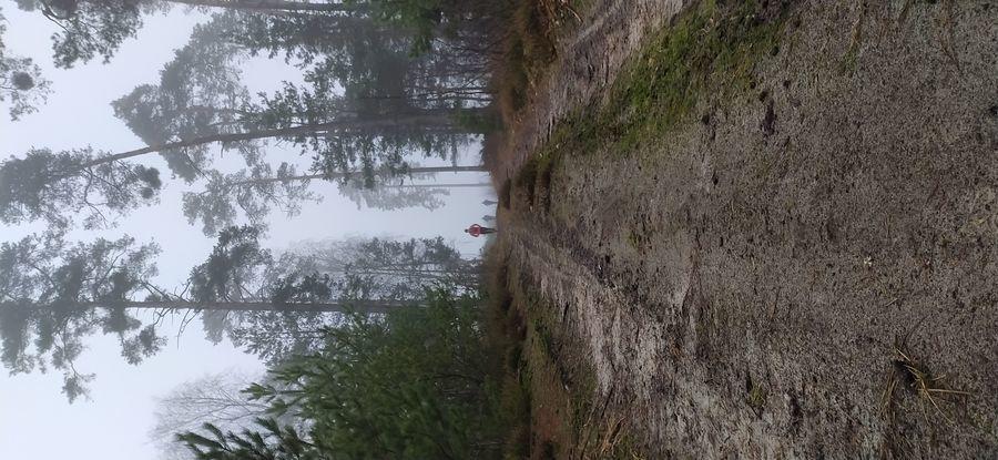 Leśna droga, na końcu biegacze