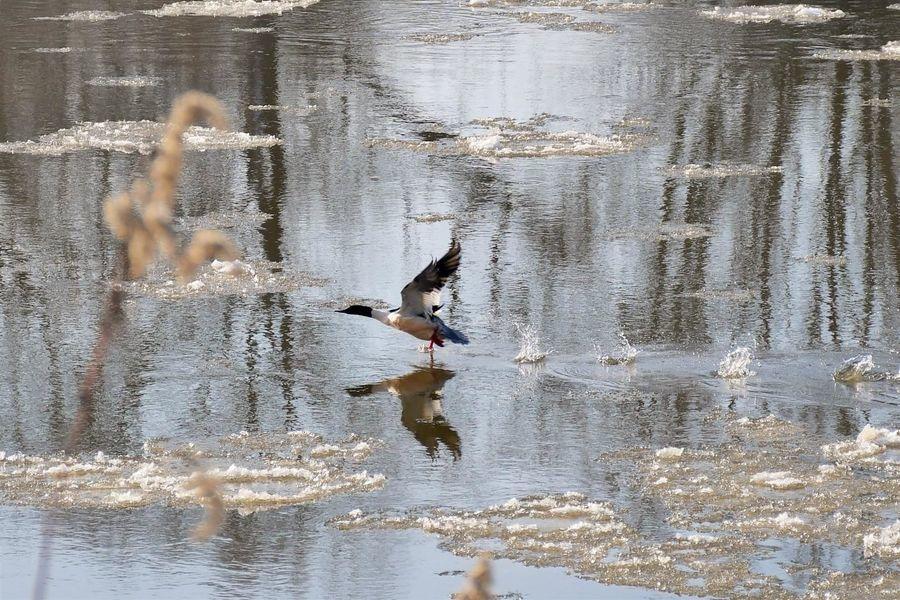 Wodne ptactwo