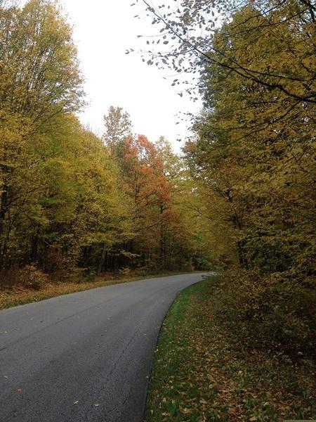 III miejsce - Julia Litwinek - Jesienny tunel