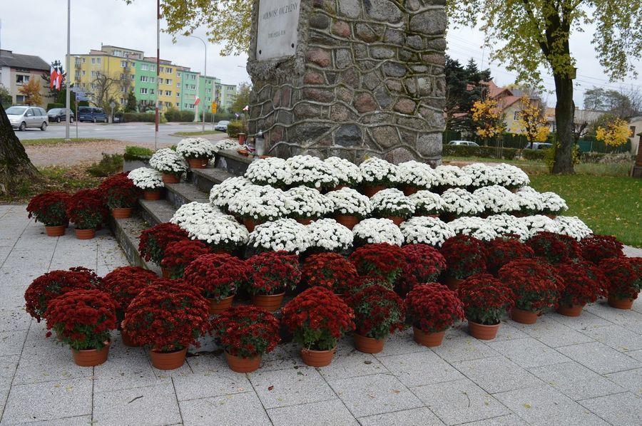 Pomnik, wokół biało-czerwone chryzantemy