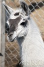 Małe Zoo w Turce