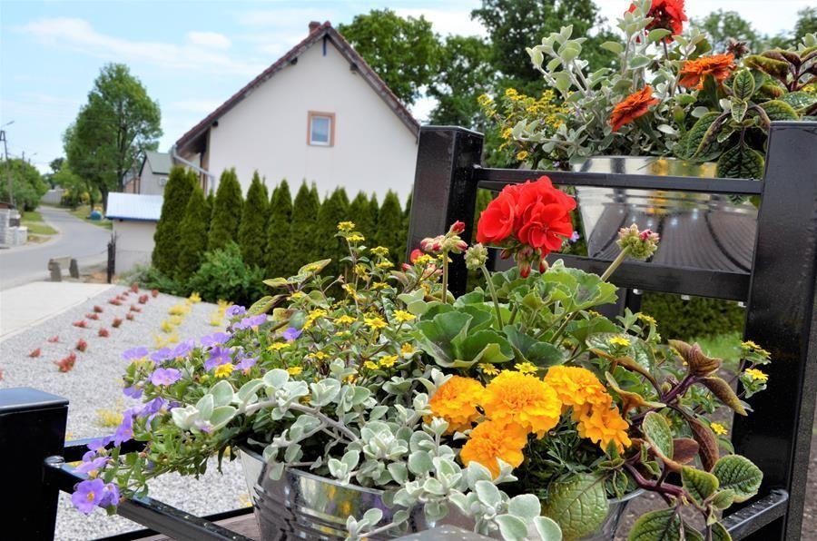 Kwiaty na Skwerze Mielęcin