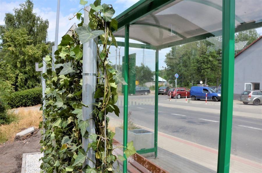 zielony przystanek