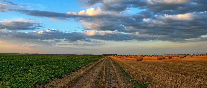Ważne wytyczne dla producentów rolnych