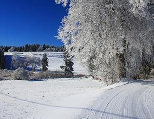 zima: drzewo, pola przykryte sniegiem