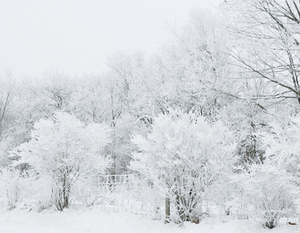 Śnieg mróz
