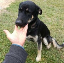 Znaleziono psa - wrzesień 2017