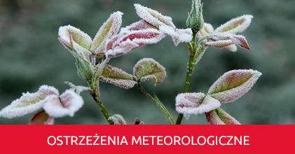 Zmarznięte kwiaty i napis Ostrzeżenie meteorologiczne