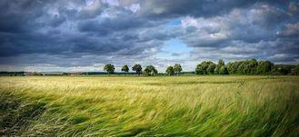Rozwiane pola