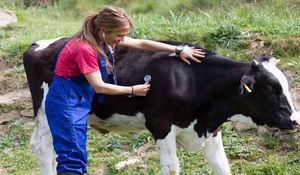 OGŁOSZENIE urzędowe badanie stad bydła