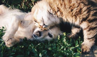 Na zdjęciu pies i kot
