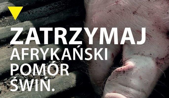 Na zdjęciu napis zatrzymaj afrykański pomór świń na tle głowy świni