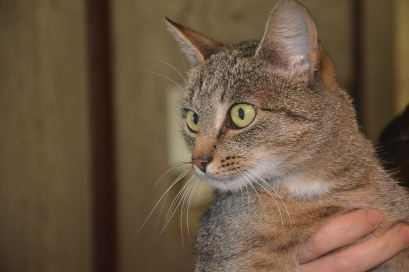 Na zdjęciu kot.