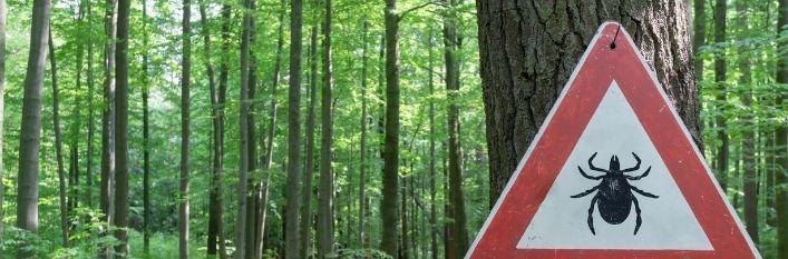 Las z tabliczką trójkąt i ikoną kleszcza