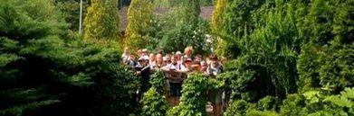 Grupa dzieci w drzewach