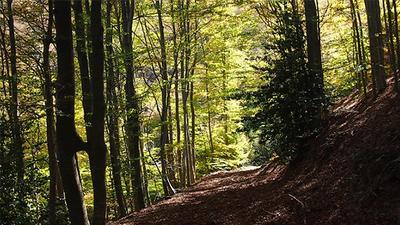 Podatek leśny