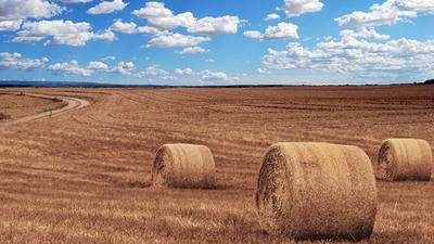 Udzielenie pomocy de minimis w rolnictwie
