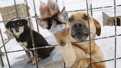 Konsultacje programu opieki nad zwierzętami bezdomnymi na 2018 rok