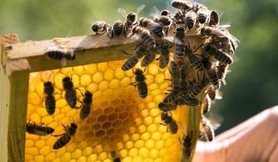 Wiosenne królestwo pszczół w gminie Jabłonna