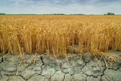 Przedłużony termin składania protokołów suszowych
