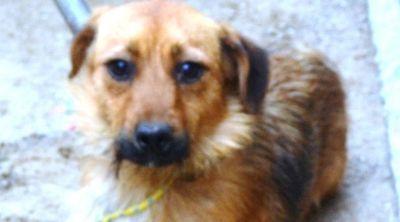 Bezdomny pies do adopcji #2