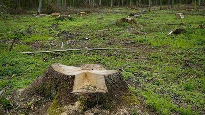 Wydawanie zezwoleń na usunięcie drzew i krzewów