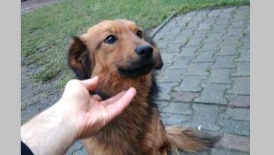 Pies Skrzynice Pierwsze