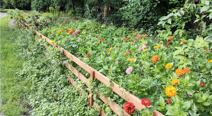 Widok na ogród z kwiatami ciągnący się wzdłuż drewnianego płotu