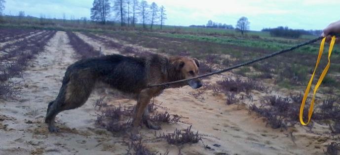 Informacja o odnalezionym psie