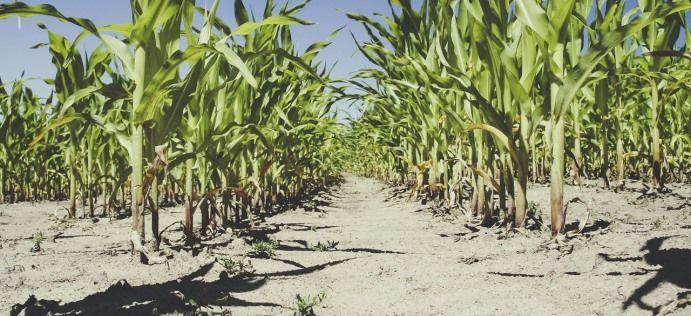 Ogłoszenie w sprawie suszy