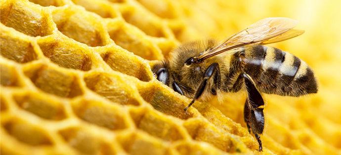 Apel do rolników i sadowników ws. ochrony pszczół