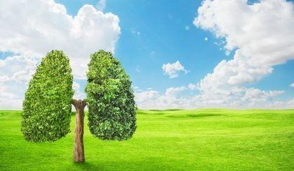 14 listopada - Dzień Czystego Powietrza