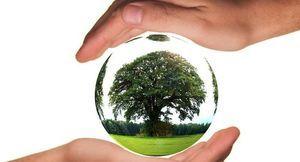 ręce chroniące drzewo