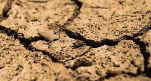 Cyfryzacja szacowania strat spowodowanych przez suszę.