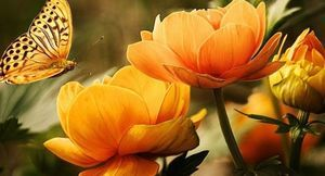 kwiaty, motyl
