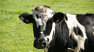 Ubój rytulany zwierząt - inicjatywa obywatelska
