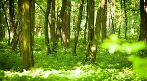 Projekt planu urządzenia lasu - wyłożenie do publicznego wglądu