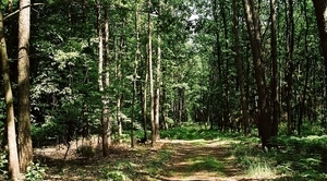 Program monitoringu lasów 2016-2020