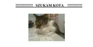 Zaginął kot w Elizówce