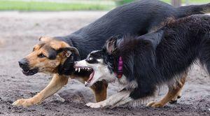 UWAGA! Wałęsające się psy.